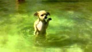 Собака, которая не умеет плавать