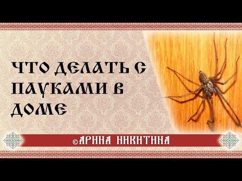 Что делать с пауками в доме