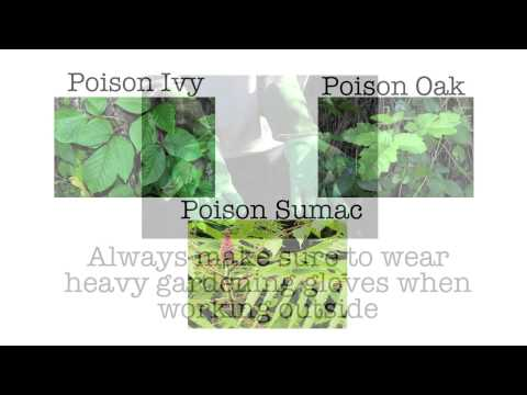 Doctors Express Medical Minute: Diagnosing and Best Treatment for Poison Ivy