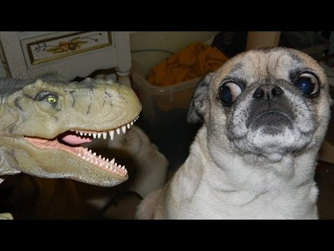 Dogs just never fail to make us laugh - Funny dog compilation