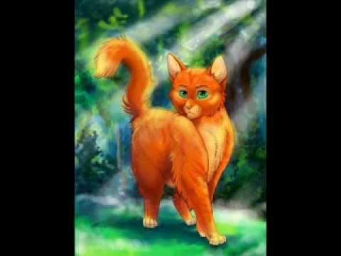 огнезвезд картинки коты воители