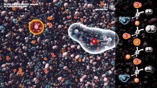 Simulation of Hydrogen burning under 100,000,000x microscope (2H2+O2=2H2O)