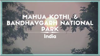 Celestielle Travel #89 - Mahua Kothi, & Bandhavgarh National Park, India