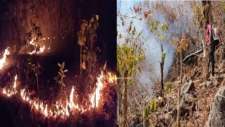 Odisha: Wildfire threatens to cause colossal damage to biosphere in Similipal Tiger Reserve