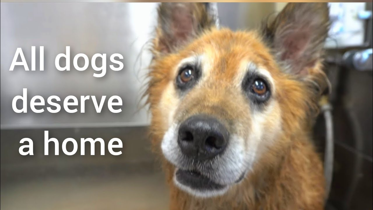 Senior dog rescued from DEATH ROW | Must Watch