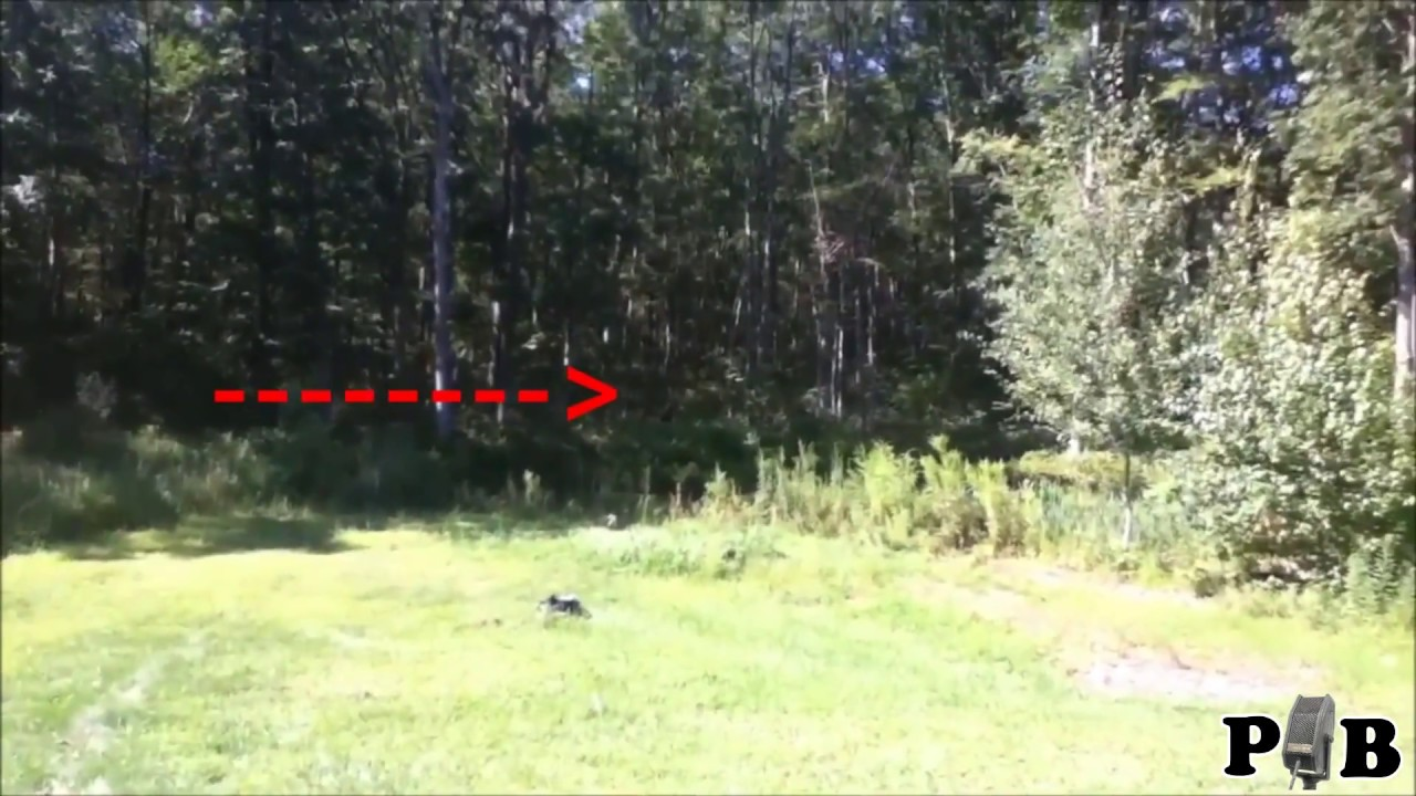 Real Bigfoot Footage An Exemplar Youtube