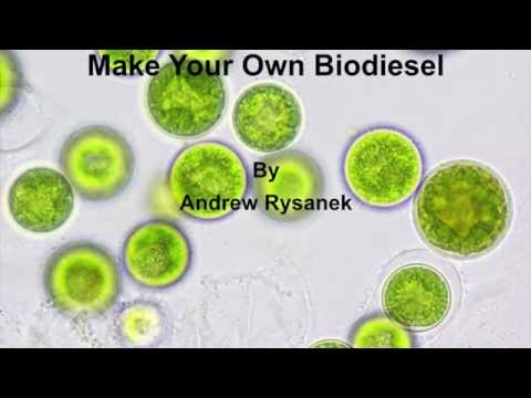 Make Your Own Algal Biodiesel