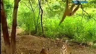 Con khỉ lầy nhất hành tinh =  Hổ, anh cũng troll hết