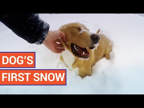 Dog's First Experience With Snow | Daily Heart Beat