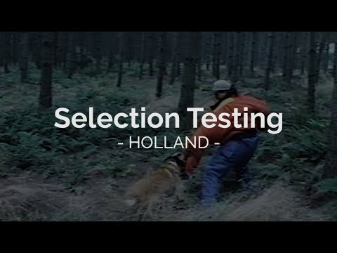 Selection Testing Holland Mass PH2 Obedience Protection