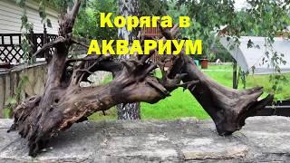Коряга в АКВАРИУМ. Коряга.