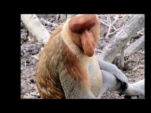 Sandakan Sabah Malaysia Borneo Jungle Travel Cheap