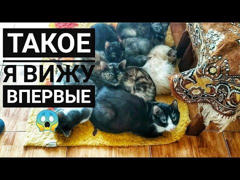 ��БАБУШКА ДЕРЖИТ 32 кошки в однокомнатной квартире ��ПРОСИТ ПОМОЩИ