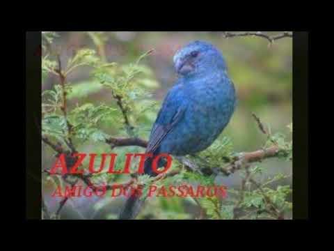 AZULITO FERRA
