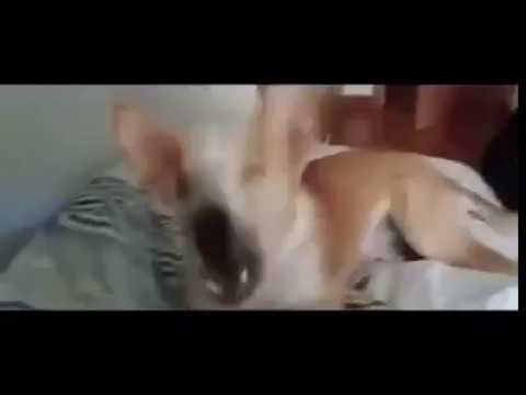 Despacito- Dog VS Cat