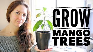 Mango Tree: The Ultimate Guide to Growing Mangoes from Seed