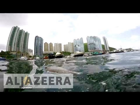 Hong Kong palm oil spill 'an environmental disaster'