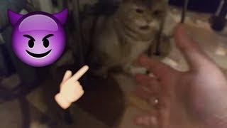 Кот говорит Я тебя НЕ ЛЮБЛЮ. Злой кот. Самое НЕ милое видео!