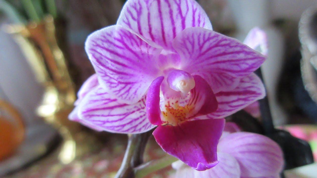 Як доглядати за орхідеями?