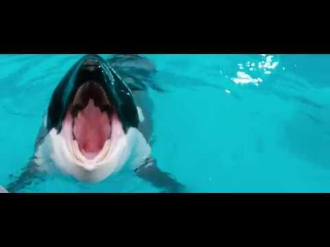 06. Audition (Free Willy / 1993) Soundtrack