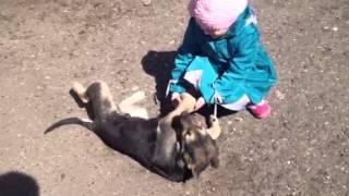 Черно-белая собака Мурка