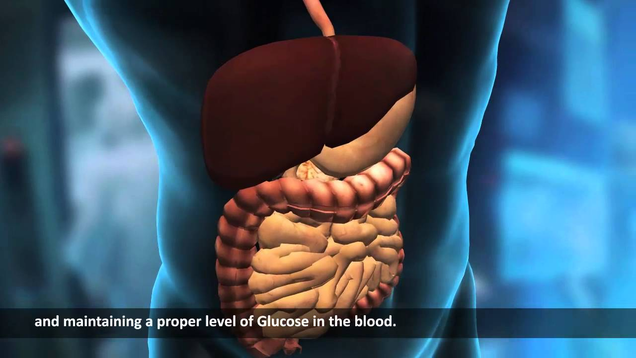 Internal Organs | Human Body | Science Video Lecture - YouTube