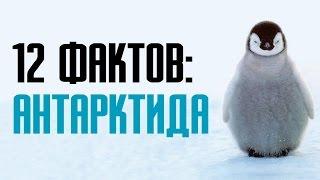 видео Интересные факты про Антарктиду