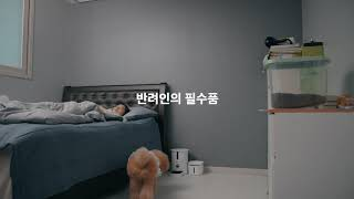 이걸 왜 몰랐을까? 반려동물 주인의 주말 낮잠 자는법 (낮잠편)