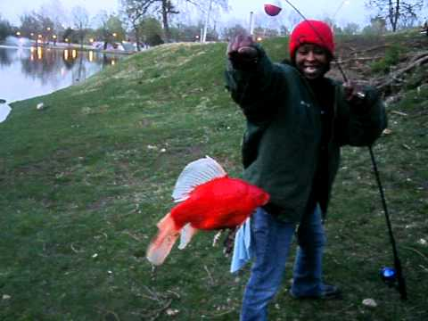 Olivia Catches A GIANT Goldfish!