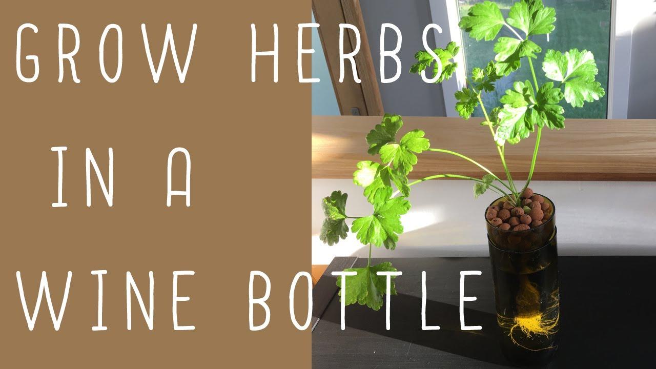 Wine Bottle Hydroponics! (Easy DIY) - YouTube