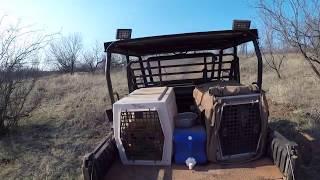 Texas Quail Hunting With Vizsla & English Pointer (Music by Good Latimer)