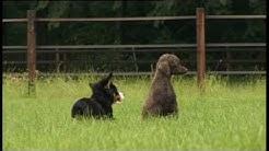 Kommunikation von Hunden von Gaby Abels und Claude van Eendenburg (c) Hundedvd