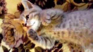 Котёнок как ребёнок