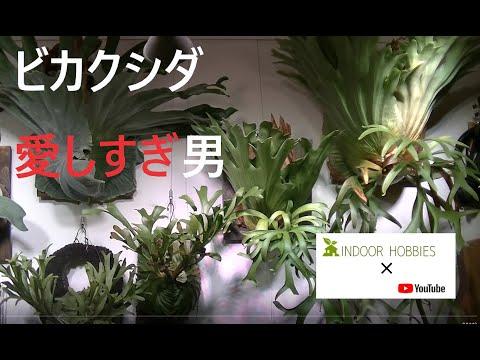 植物系Youtubeチャンネルを開設してみました。