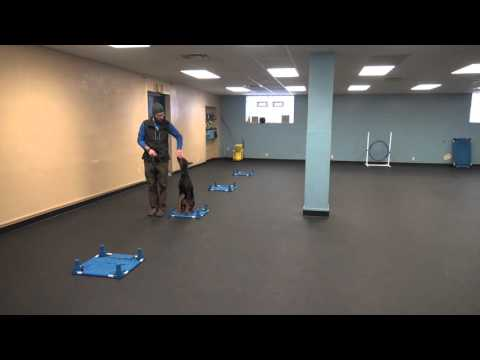 Troubleshooting Heel | Tyler Muto | K9 Connection Buffalo NY dog Training