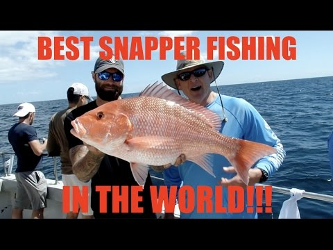 WORLD'S BEST SNAPPER FISHING!