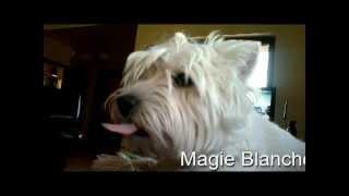 Westie - Snake, West Highland White Terrier
