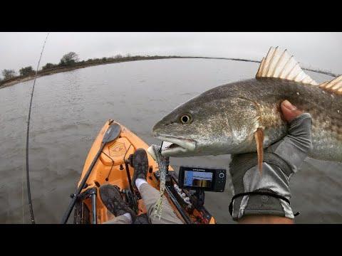 Dickinson Bayou Zombie Redfish / His Tail 🤢