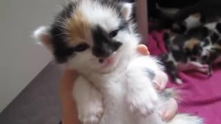 Мини кошка видео засыпает в руках