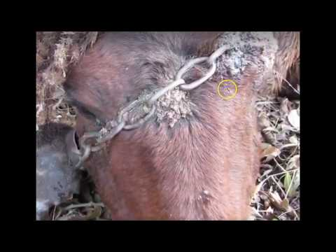 Why I Hate Horse Shows, Bits, Tie Downs, Chains & Idiots - Don