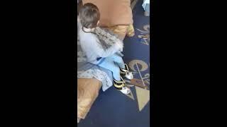 Занятия с детьми ДЦП-ками в домашних условиях