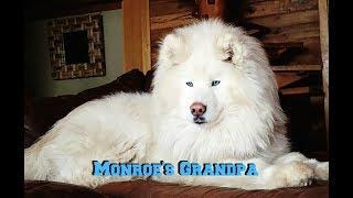 Monroe's Embark DNA Results! thumbnail