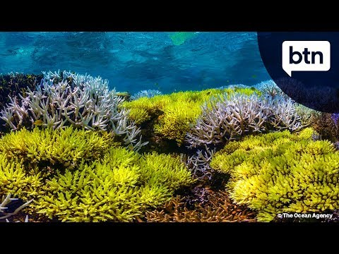 Pt 1: Great Barrier Reef Solutions - Behind the News