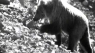 Особенности охоты на руси 15: Охота на медведя