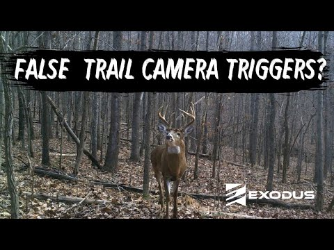 False Trail Camera Triggers? Here Could Be Why: PIR Sensor Troubleshooting