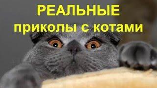 ТОП - 10 Самые смешные коты!Реальные приколы с котами. Самая ТОПовая подборка!