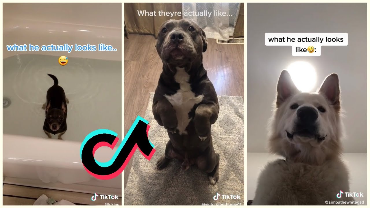 What I Thought My Dog Would Be Like Tiktok Compilation Youtube Goofy Dog Dogs Your Dog