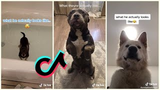 What I thought my dog would be like [TIkTok Compilation]