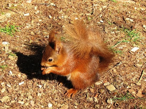 Yorkshire Dales Country Walk   Snaizeholme Red Squirrel Trail in Widdale near Hawes round
