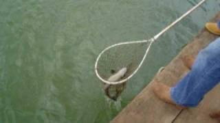 Pescaria em Santa Juliana